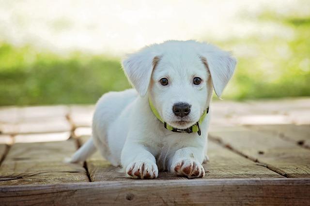 hund suess weiss 640