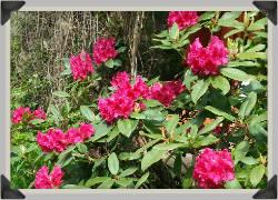 Ideen zum Blumenstrauss